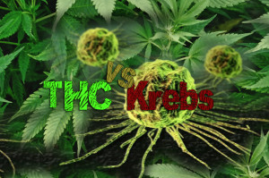 Krebs – Chemotherapie vs. THC